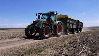 Weizenernte in Rumänien!