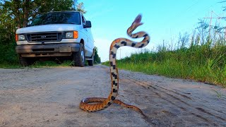 This Snake Jumped Right into My Hands ~ Funny Animal Video