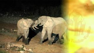 Namibia erleben / Teil 28 - Etosha/Am Wasserloch von Halali