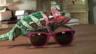Super Chameleon(The super chameleon shows his super camouflaging powers. Music by YUKSEK -