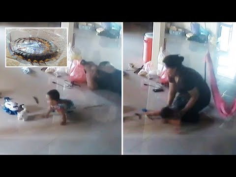 Mother Makes EPIC Save To Stop Centipede Biting Baby