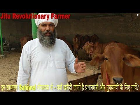 PM and CM purchase his SAHIWAL Cows. GURUMUKH Sir's Farm @ SIRSA Haryana. Story of Simple Kisan.