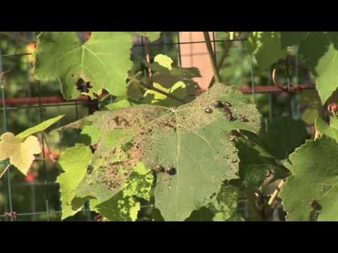 Natural pest control for your vegetable garden doovi Organic pesticide for vegetable garden