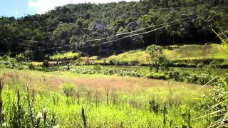 Farmstay in Brazil - our Vetiver project