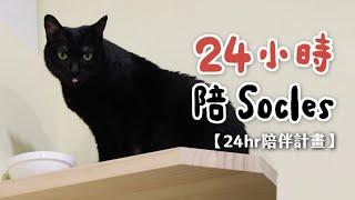 【黃阿瑪的後宮生活】24小時陪Socles24hr陪伴計劃