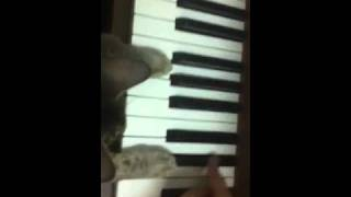 Cat first piano lesson Thumbnail