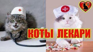 5 Болезней Человека, Которые Может Вылечить Кошка!!!