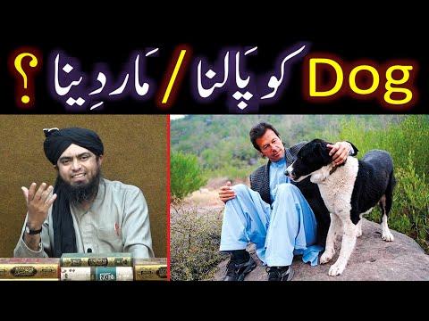 DOG peh Islamic Rulings ??? Rabies Vaccine ??? DOG Killing & Pets ??? (Engineer Muhammad Ali Mirza)