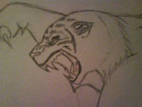 how to draw an angry tiger - YouTube
