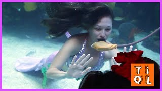 REAL LIFE MERMAID - Mermaid show in huge aquarium at Silverton Casino Las Vegas