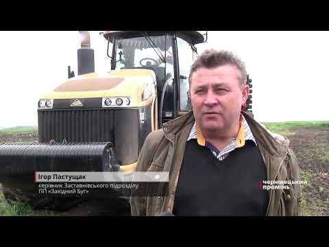 Чернівецький Промінь: Як тривалі дощі на Буковині вплинуть на врожай?