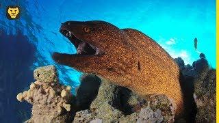10 Cosas que NO sabias de las Anguilas Morenas