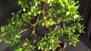 Как сделать искусственное дерево  Бонсай своими руками