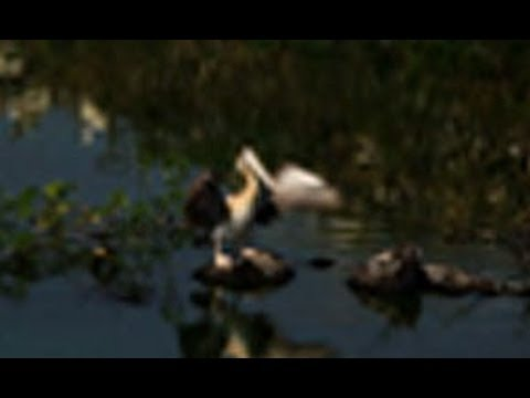 Nelapattu Bird Sanctuary - a haven for wetland birds