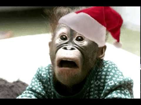 Baby monkey singing christmas song with a funny ending - YouTube