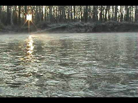 Hoodsport chum salmon doovi for Nisqually river fishing report