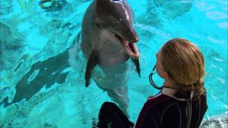 Download Super Smart Dolphin Answers Questions | Extraordinary Animals | Earth Mp3 and Videos