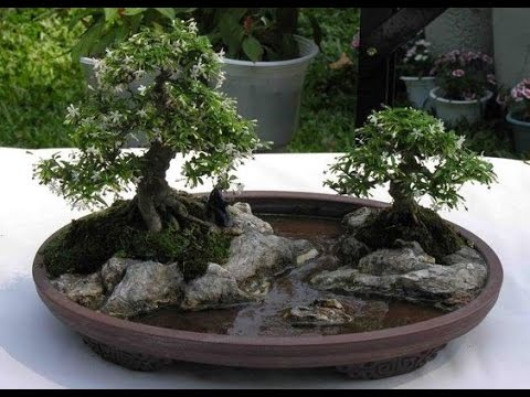 miniature plants enlarge