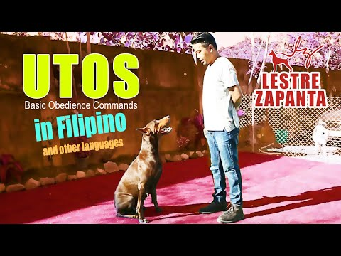 UTOS: Basic Obedience Commands in Filipino and other languages l Lestre Zapanta