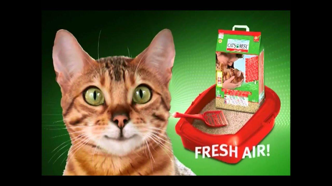 Best Natural Cat Litter