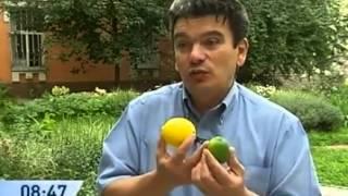 Диетолог Скачко (Киев). Правильное питание: лайм или лимон? Школа здорового питания: 383-19-20