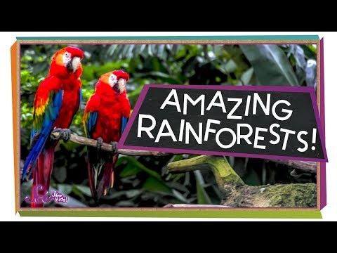 Explore the Rainforest! | Ecology for Kids