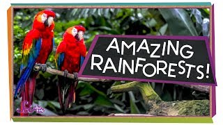 Explore the Rainforest!