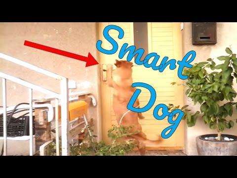 Smart Dog | Kali