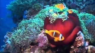 ◄|شاهد| جولة مصورة في جزيرة تيران: شعاب مرجانية وأسماك ملونة - المصري لايت