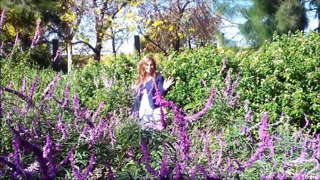 Le Jardin De Fleurs Youtube