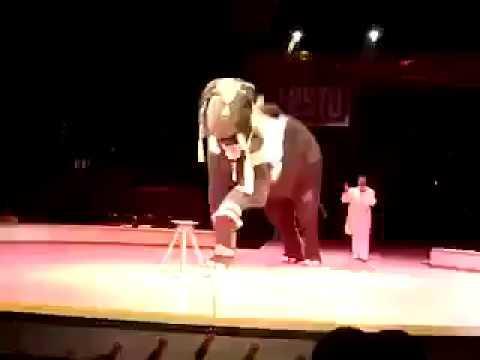 Elephant tricks circus