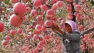 عندما يصل الابداع والجمال في عالم الزراعه لهذا الحد|مريح للبصر|Amazing Agriculture World