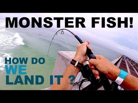 Bait Fish for Chicken food - Big Fish Fight !  Pier Fishing Pensacola
