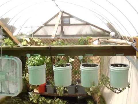 Unlimited organic aquaponic food for life for Swimming pool converted to greenhouse