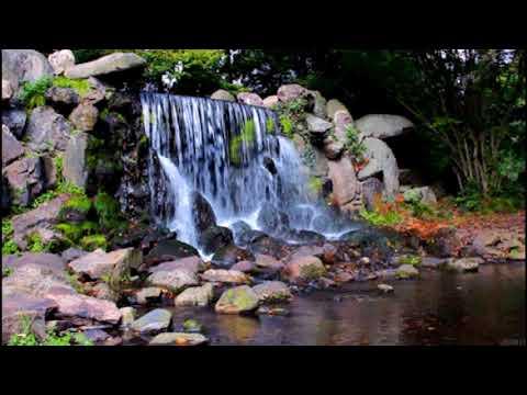 Meditation Music Sleep, Healing Sound, Forest, Nature Bird Sound, Rain Forest Sound.