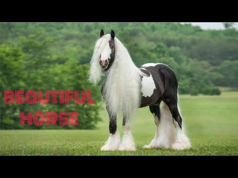 Most beautiful horses in the world दुनिया में सबसे सुंदर घोड़ा