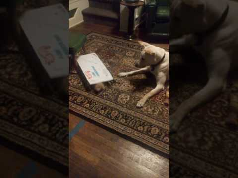 Cat in the box.