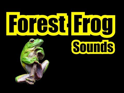 """✪ LOUD FOREST PEEPERS ✪ NATURE SOUNDS """"FROG SOUNDS"""" Frog Noise 12 Hours"""