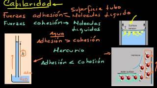 Capilaridad. 1