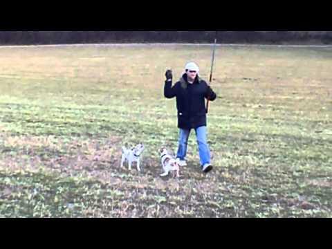 Abby, Ruby und der Dog Dangler - Spiel mit der DIY Reizangel