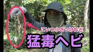 アマゾン川で毒ヘビ発見!?ジャングル探検ツアーに参加してみた【危険生物】