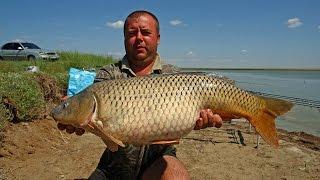 Рыбалка на карпа в июне, водоем Оверьяновка