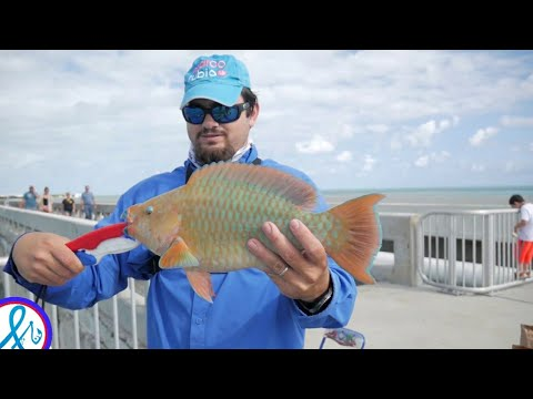 Bridge Fishing The Florida Keys- Monster ParrotFish, rainbow fish Islamorada Channel 2