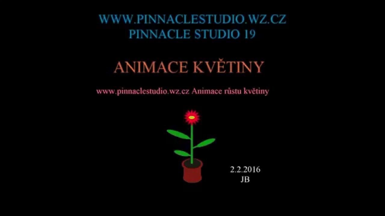 Pinnacle Studio Ultimate - Alle online-prijzen op een rij