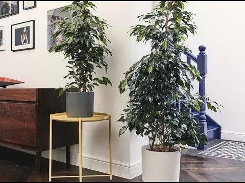 ТОП-10 самых популярных КРУПНЫХ комнатных растений