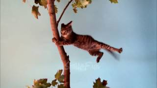Funny cats compilation 12
