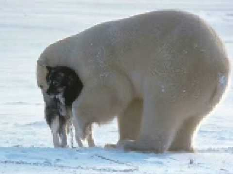 Polar Bear and Dog Make Friends SO CUTE!!