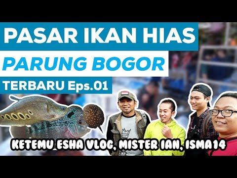PASAR IKAN HIAS PARUNG   Episode. 01   REVIEW HARGA IKAN HIAS PARUNG