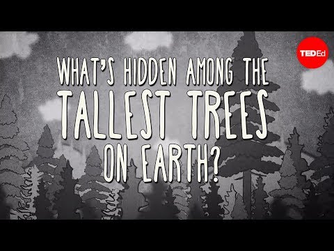 What's hidden among the tallest trees on Earth? - Wendell Oshiro thumbnail
