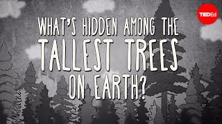 Repeat youtube video What's hidden among the tallest trees on Earth? - Wendell Oshiro